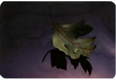 leaf_teardrop